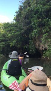 石垣島 (宮良川のマングローブをカヌーで川下り)